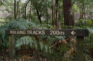 Close up image of 'walking tracks 200m' signage at the start of the Beeripmo walk
